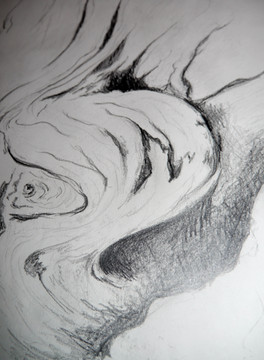 Edward Weston Tree study