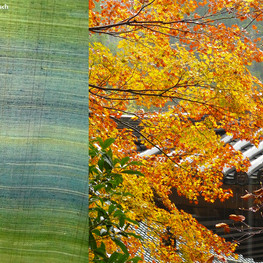 Colours of Japan – The poetry of Fukumi Shimura