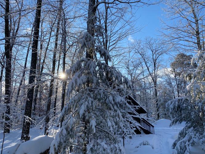 Snowy pines.jpeg