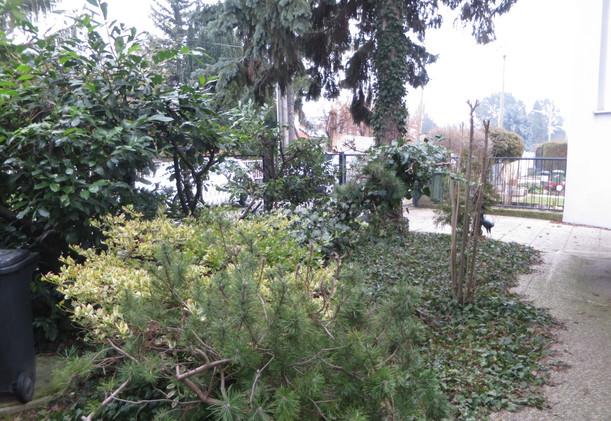 Schwarzlackenau pflegeleichter Garten