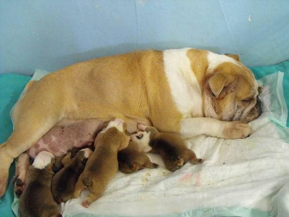 Nursing pups.jpg