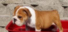 Flyer Pup 1.jpeg