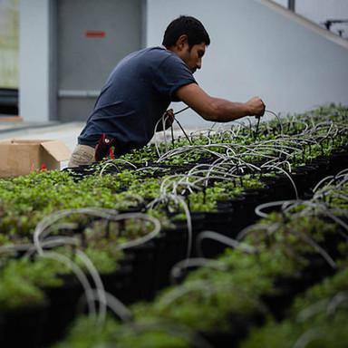 CEA-Indoor Farming