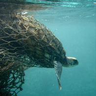 Alleviating Waste in Our Oceans