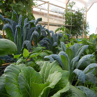 Urban Agriculture Solutions