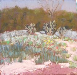 placitas sunny hillside