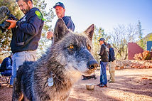 Wolf Week Meet_0209 copy.jpg