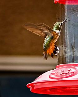 beak open