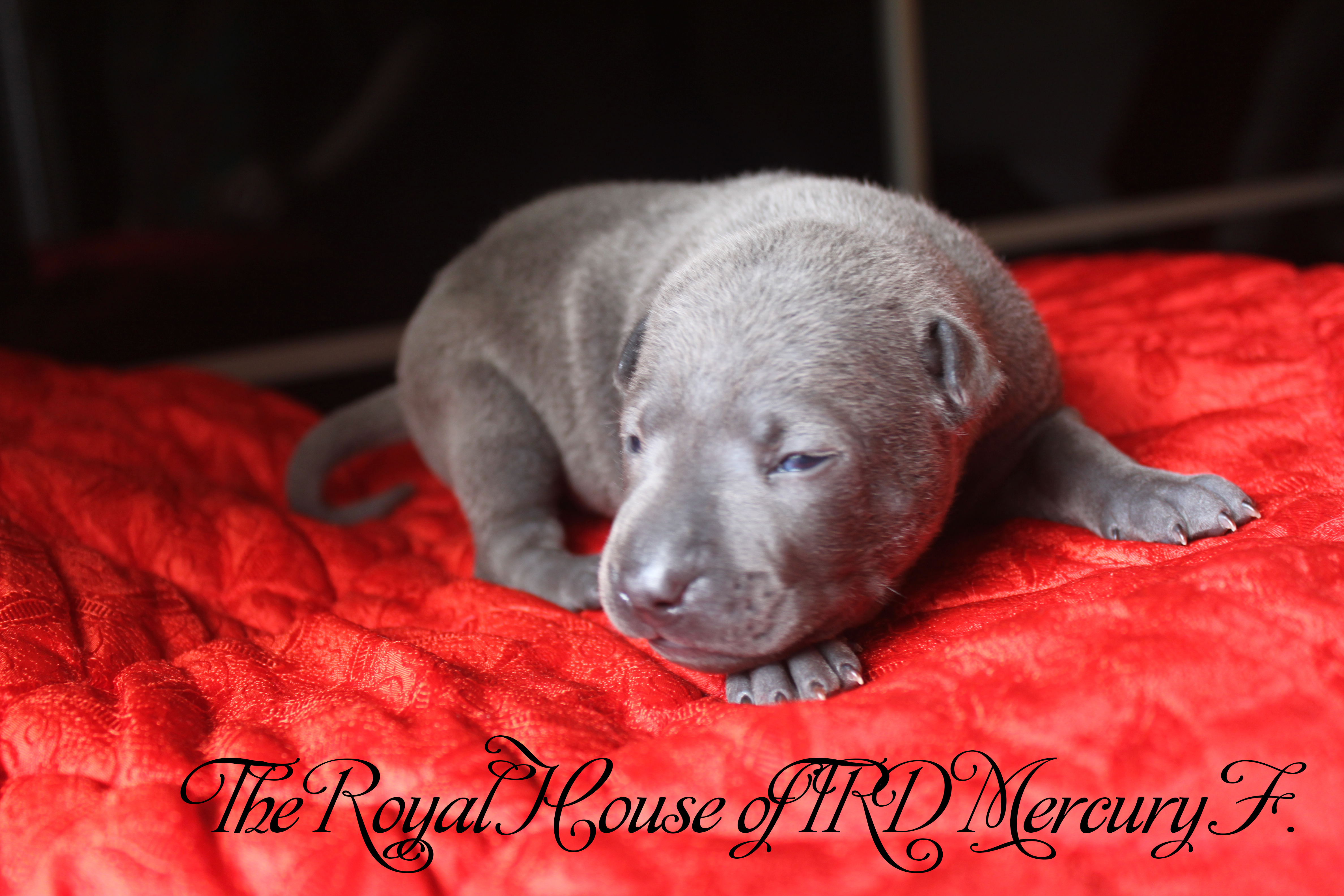 The Royal House of TRD Mercury F.