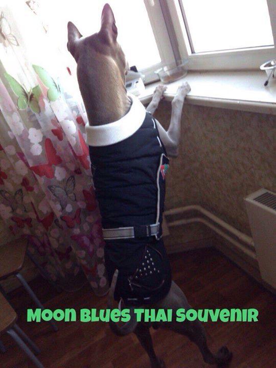 Moon Blues Thai Souvenir