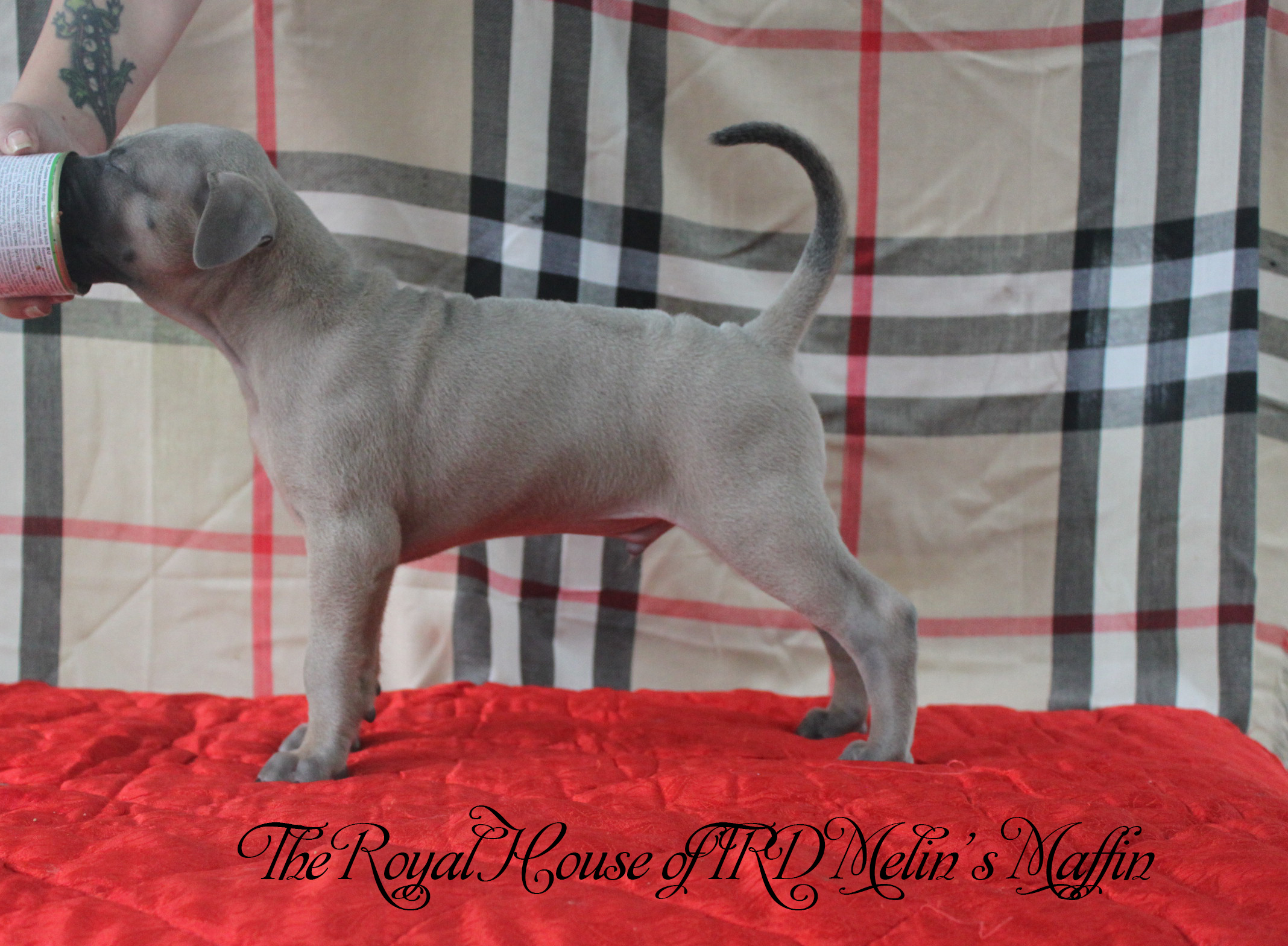 The Royal House of TRD Melins Maffin