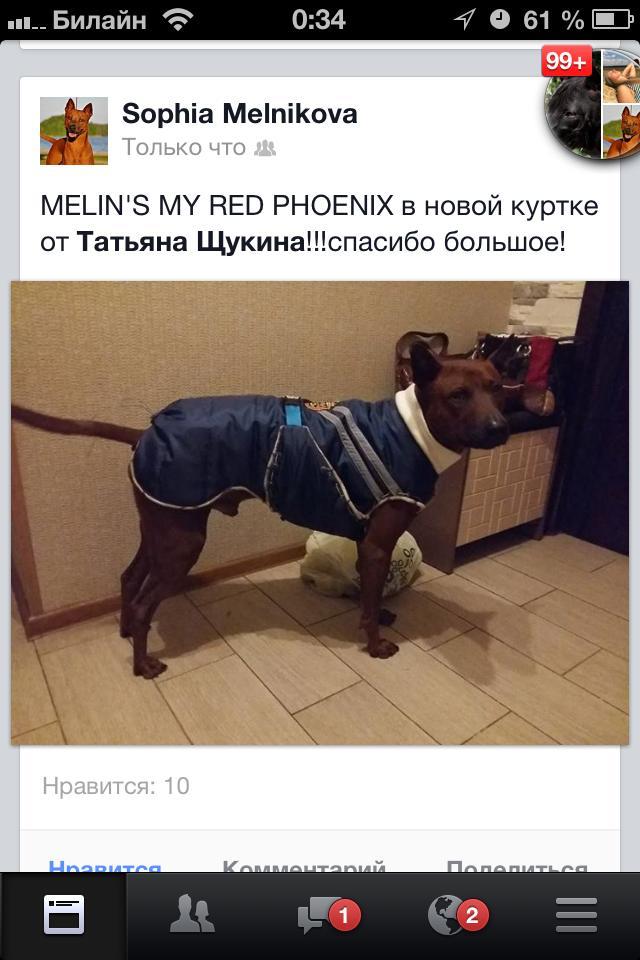 Melins My Red Phoenix