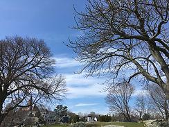 trees at Crocker Park.JPG