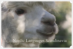 Nordic_Languages_Scandinavia_Termine.jpg
