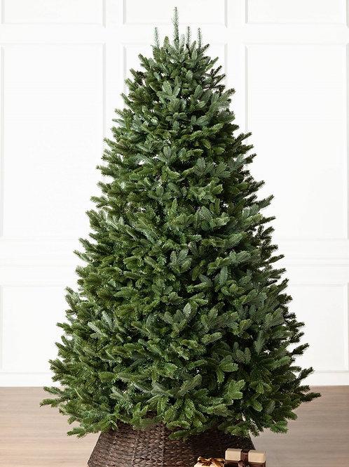 5-6' Fraser Fir Tree