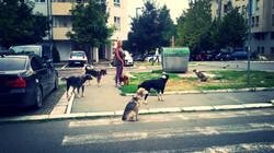 Save a Dog Germany e.V