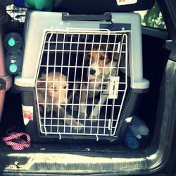 Save a Dog Germany e.V.