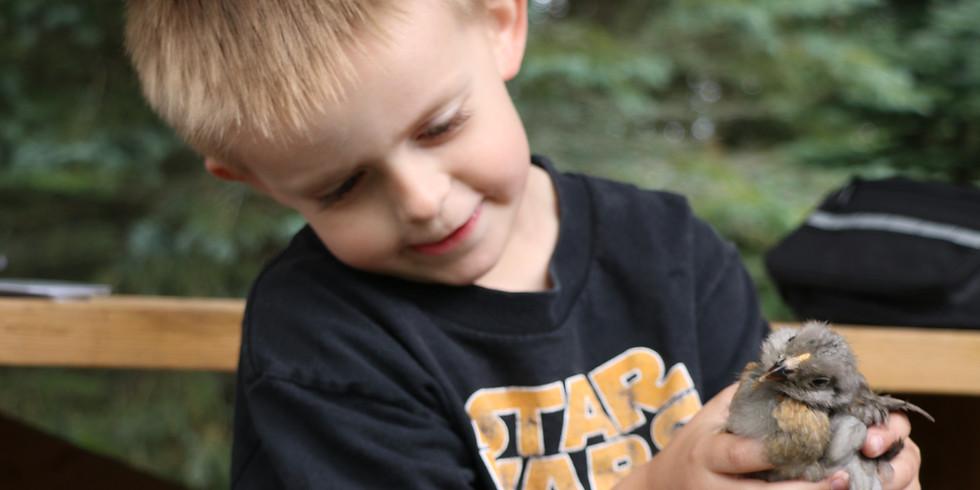 Farm Fresh Adventures for Kids - Bunnies & Chicks