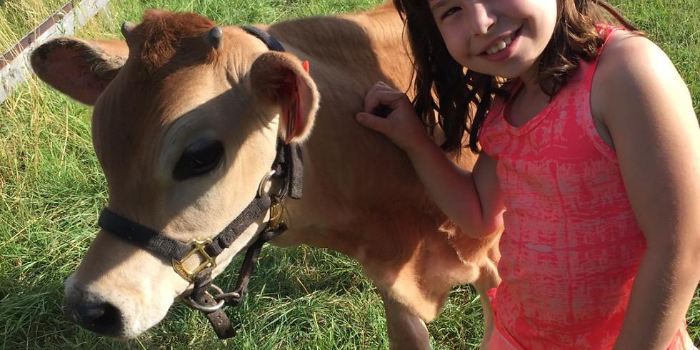 Farm Fresh Adventures for Kids - Cattle & Calves