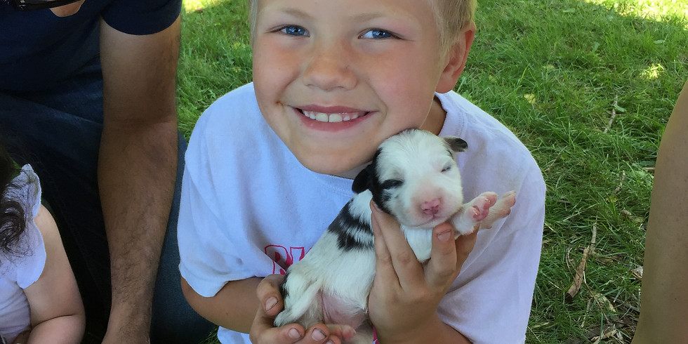 Farm Fresh Adventures for Kids - Puppies
