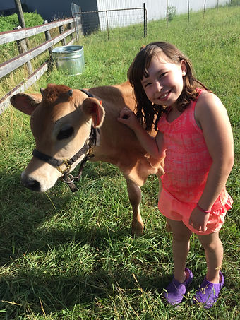 Olivia and the Jersey Steer, Norman