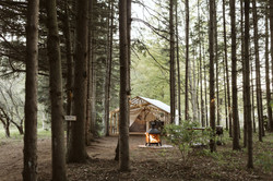 Glamping Forest