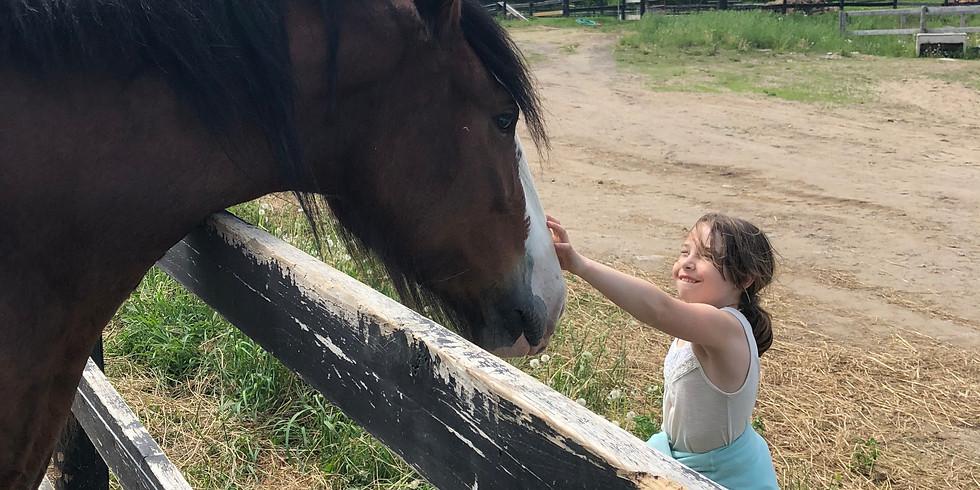 Farm Fresh Adventures for Kids - Horses