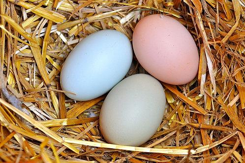 Fertilized Easter Egger Chicken Eggs