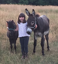 Olivia, Dusty the Mini Horse and Forrest the Donkey