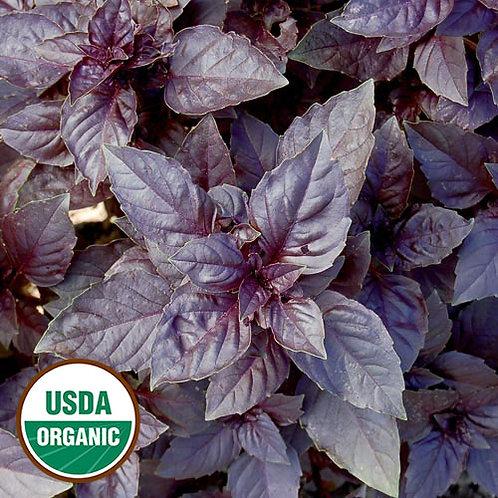 Purple Dark Opal Basil (Ocimum Basilicum)