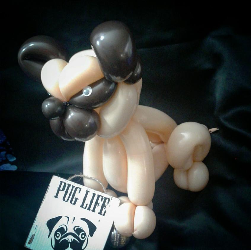 Pug love balloon twister in Portland Ore