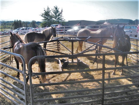 Pony Rides and pony Carousel