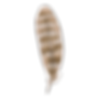 Feather%202_edited.png