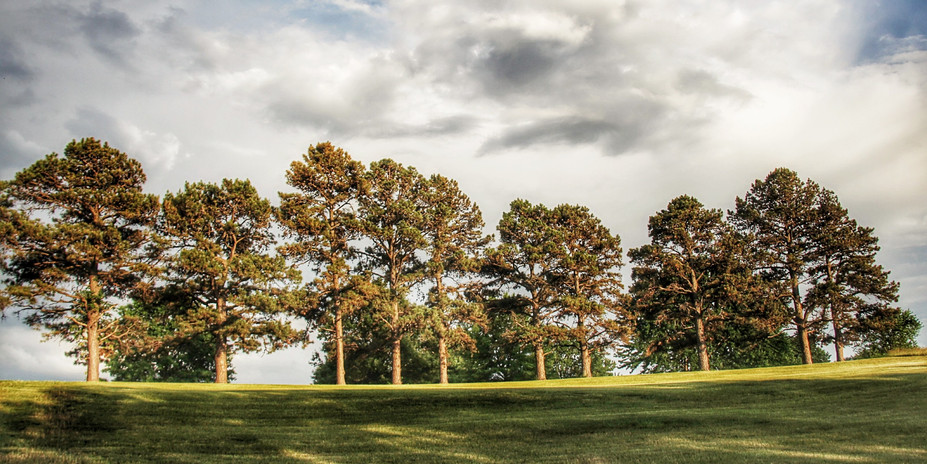 A_Trees.jpg