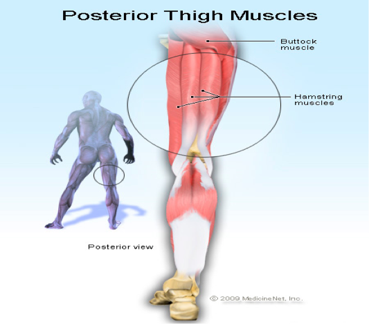 Hamstring Injuries - How they occur & how to Treat them!