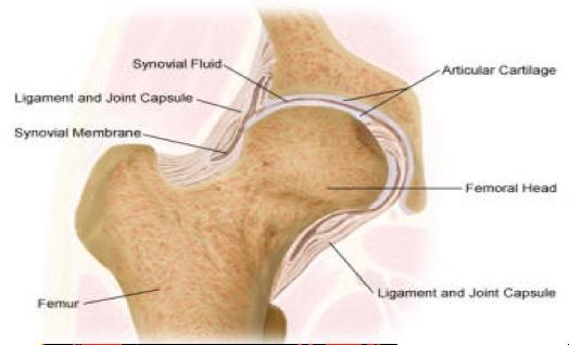 Hip & Groin Pain when walking - Capsular Strain