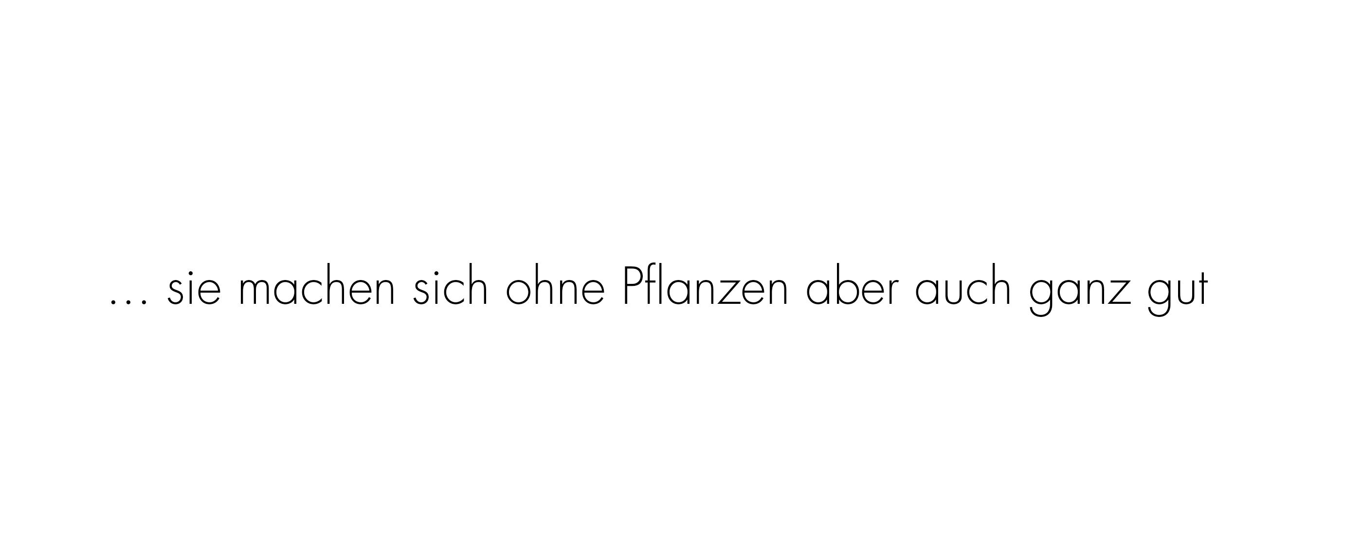Text_Luftpflanzen_2