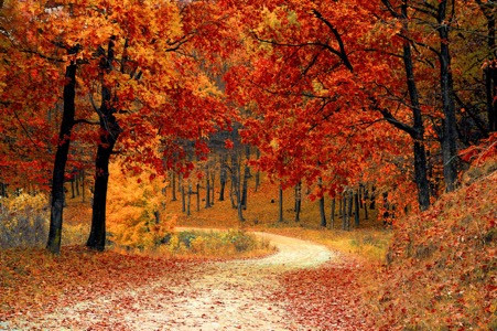 autumn winding road