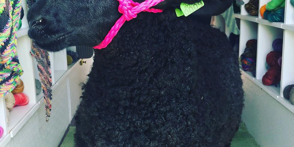 Kenmore Farmer's Market Knit-In