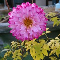 Marlow Garden Services - Pink garden flower