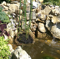 Marlow Gardening Services - pond & rockery
