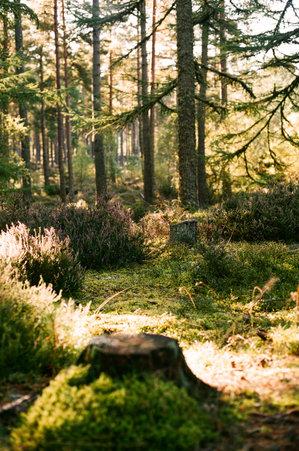 Culbokie Woods