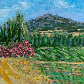 Corsican vineyard