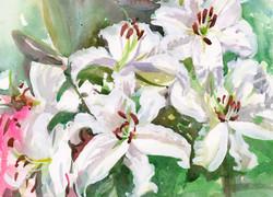 Petals White Lilies