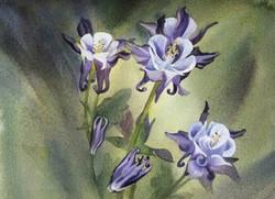 Watercolors of Flowers Cards Columbine