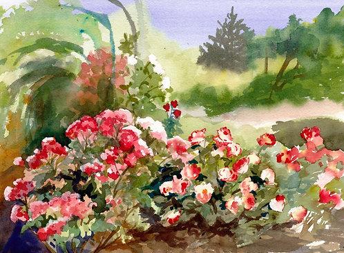 Prints | Rose Garden | June