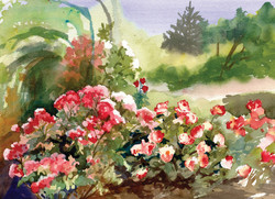 Rose Garden Cards June Roses