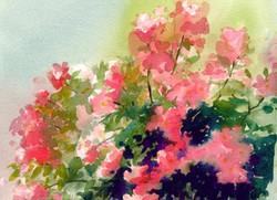 Rose Garden Cards Rainy Day Roses