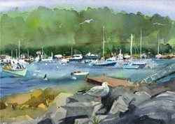 Acadia Cards Northeast Harbor