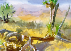 Joshua Tree Cards Branches